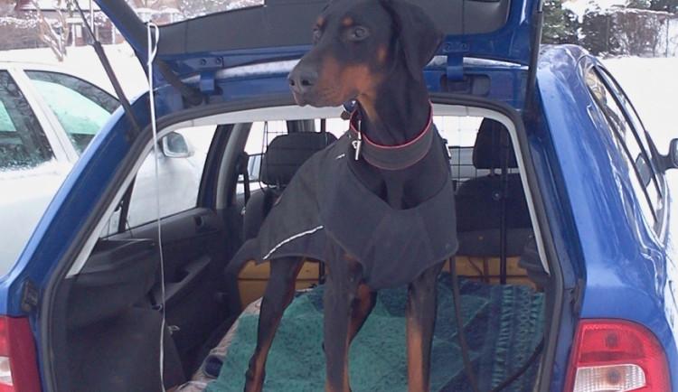 Provozuje psí taxi, k nápadu ji přivedla osobní zkušenost