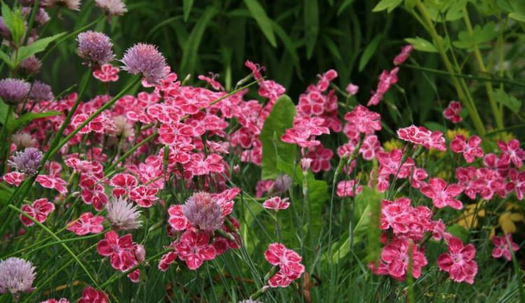 V zahradě libereckého pěstitele rozkvétají stovky květin