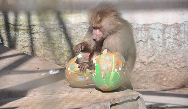FOTO: Zvířata v liberecké zoo slavila Velikonoce. Dostala papírová vejce s dobrotami