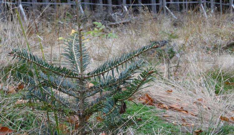 Do projektu na sázení stromů se zapojilo 9 obcí včetně Liberce. Vysazeno bude letos přes 27 tisíc buků, dubů a jedlí
