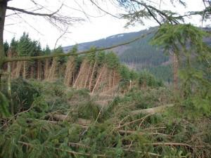 Deset let poté: Po orkánu Kyrill v Libereckém kraji už mnoho stop nezůstalo