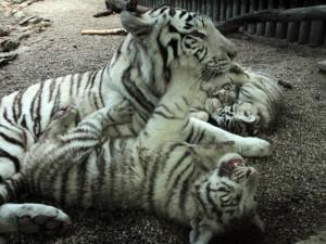 Zoologická zahrada po pěti letech zdražuje vstupné