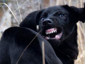 ZÁPESNÍK #10: Vzteklý pes napadal bezbranné turisty