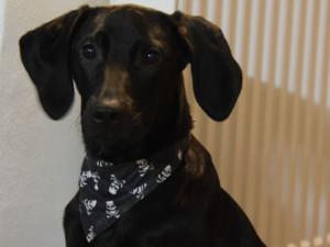 ZÁPESNÍK #11: Pubertální pes