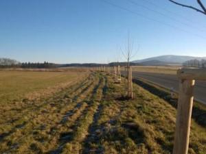 Liberecký kraj chce letos vysadit na Frýdlantsku 368 stromů