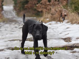 ZÁPESNÍK #13: Mluvící pes