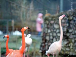 Libereckou zoo trápí nedostatek vody, chystá projekt za 38 milionů korun