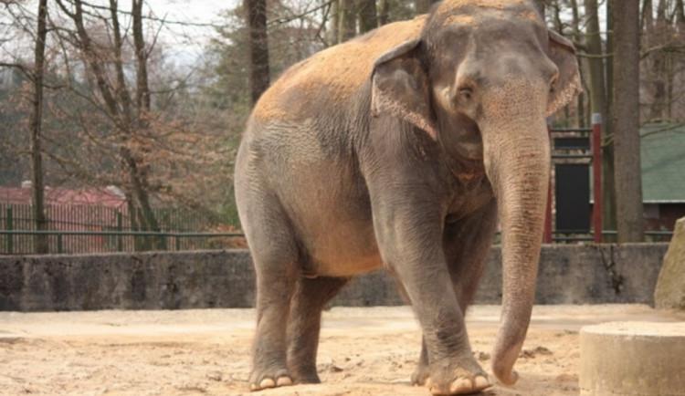 Tipy na víkend: Krása bižuterie, rockové melodie a den slonů