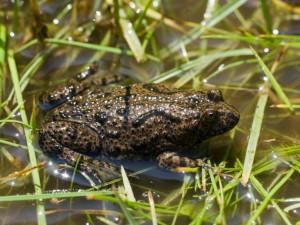 Českolipsko má o čtyřicet tůní více, měly by se stát domovem pro žáby a mloky