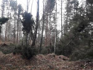 Do lesů na Frýdlantsku je ode dneška zákaz vstupu, polámané stromy jsou nebezpečné