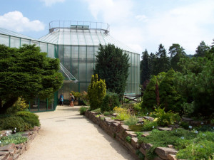 Botanická zahrada představí dvě nové expozice, jedna bude o květeně v Jizerkách