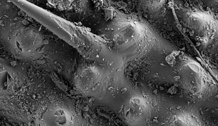 Vědci z liberecké univerzity umí z rýžových slupek vytěžit oxid křemičitý