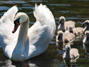 S jarem souvisí i mláďata. Kdy ale potřebují zachránit a kdy je lidský zásah zbytečný?