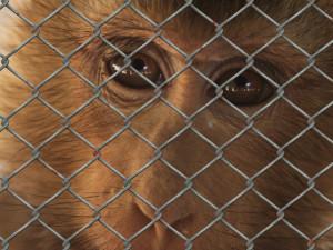 Testování na zvířatech. Podle ochránců nekonečný problém. Umírají pro nás, volají