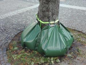 V Novém Boru testují novou metodu zavlažování stromů v ulicích, stromy mají sukýnky