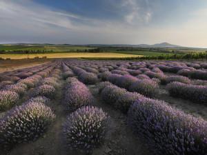 Od levandulí až po folklor. Skryté krásy jižní Moravy musíte pojmout všemi smysly