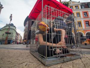 FOTO: Sele, slepice i holka v miniaturní kleci s mřížemi. Hororový film? Ne, realita