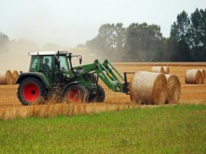 Změny v obdělávání půdy. Velké lány ZOD Brniště rozdělí meze se stromy