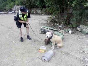 U Nisy na opuštěném místě byl dva dny uvázaný pes