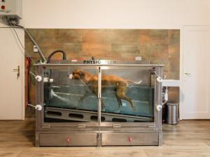 Ťapkání ve vodě může psa postavit na nohy aneb když aquaterapie pomáhá