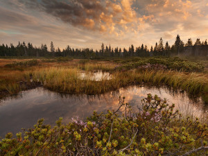 Do Jizerek se vrací původní dřeviny. Budou zde vznikat i přehrážky pro zadržování vody