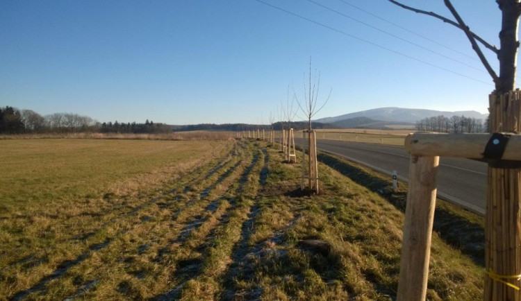 Kolem krajských silnic vyrostou aleje na Novoborsku ale i z Frýdštejna do Jílového