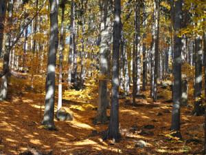 Jizerskohorské bučiny usilují o zápis na seznam UNESCO