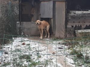 FOTO: Zubožený Árny žil ve stodole. Včera byl odebrán. Majitelku čeká stíhání