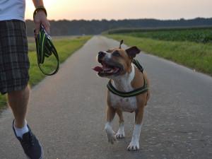 V Liberci bude nahlášení čipu psa do registru města dobrovolné