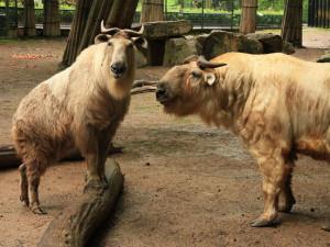 Do liberecké zoo si to včera namířilo přes pět tisíc návštěvníků