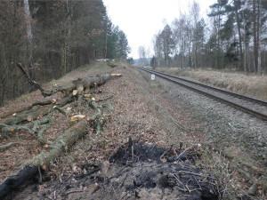 Společnost pokácela stromy podél trati bez povolení. Dostala pokutu 180 tisíc