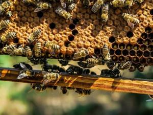 Studenti vytvořili nový spolek Petrklíč. Chtějí veřejnost přiblížit k ekologii, včelařství i botanice