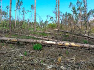 Orkán Sabine si vybral daň i na lesích. Jen v kraji poškodil více než deset tisíc kubíků dřeva