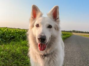 Ztracené psy mohou lidé nově hledat v aplikaci Státní veterinární správy