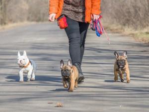 Turnov prodlužuje termín poplatků za psy a odpad