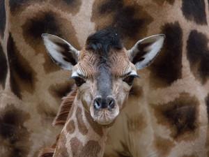 Když nemůžete do Zoo, přijdou zvířata za vámi skrze živá vysílání