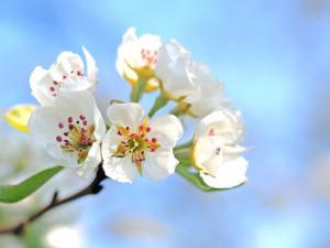 V Chrastavě vyrostla nová alej s ovocnými stromy