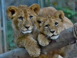 Veřejnost podporuje libereckou zoo finančně i materiálně. Věnovala ji již i stovky kilogramů krmiva