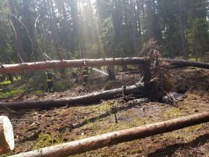 V Ralsku hořel les, zasahovali i hasiči ze Středočeského kraje
