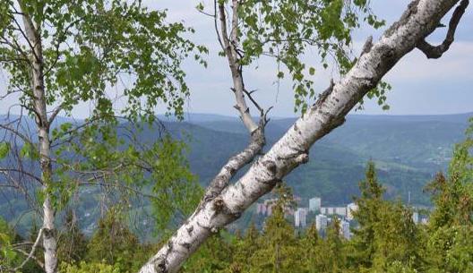 TIP NA VÝLET: Z Černé Studnice až na Muchov, krásný ale opomíjený vrchol