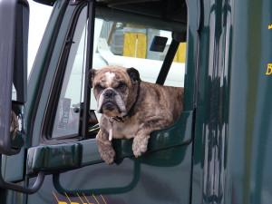 Jak správně přepravovat psa nebo kočku autem