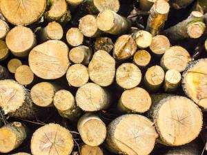 Z Partyzánské ulice v Liberci zmizely stromy, pokácet je nechalo ministerstvo obrany