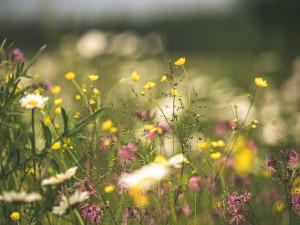 V České Lípě si občané stěžují na vysokou trávu. Město chce postupovat šetrně