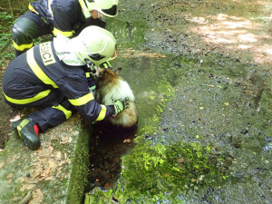 Během víkendu stačili hasiči zachránit labutě, psa i kocoura