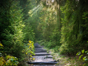 Jaká pravidla platí pro chování v lese