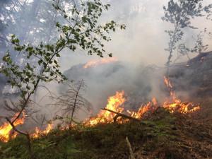 FOTO: U požáru ve skalnatém terénu v Ralsku zasahovalo jedenáct jednotek hasičů