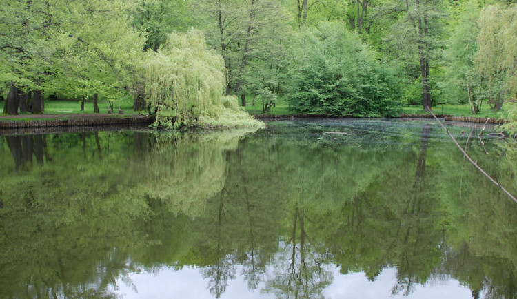 Policie vyšetřuje úhyn ryb v zámeckém rybníku ve Frýdlantu