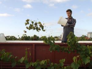 Vlastní víno, krásné kytice, lásku k přírodě a vše o zahradnictví nabízí Česká zahradnická akademie v Mělníku