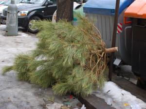 Je po Vánocích. A co teď se stromkem? Svoz začne ve středu