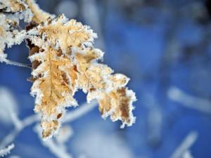K ránu teplota v Libereckém kraji byla místy pod minus 15 stupni